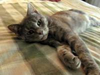 Feline Hyperthyroidism Symptoms
