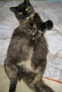 Cat Breeding